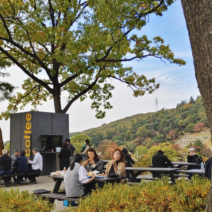 야탑 메모리얼파크 공원에서 올해 첫 단풍구경