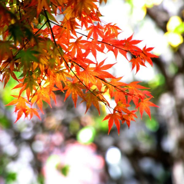 가을속의 분당메모리얼파크 박용하쉼터소식
